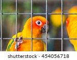 Yellow And Orange Parrot In A...