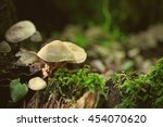 Non Edible Mushroom In A Forest