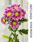 Small photo of chrysanthemum claret