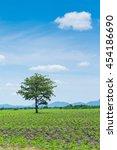 alone tree on autumn field... | Shutterstock . vector #454186690