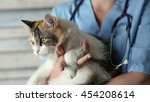 young female doctor veterinary... | Shutterstock . vector #454208614