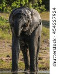 Small photo of African elephant playing in water, Botswana