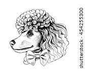 portrait of a toy poodle dog in ... | Shutterstock .eps vector #454255300