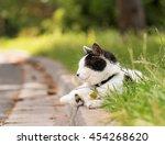 Adult White And Black Cat Lyin...