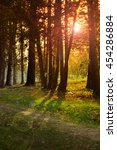 sunrise in autumn forest.   Shutterstock . vector #454286884