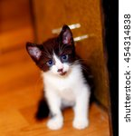 Stock photo adorable sweet little kitty on wooden floor 454314838