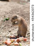 Small photo of Awesome prairie dog outdoor shot. Prairie dog is typical Africa species, prairie dog could be found also in Zoo. Animal shot capturing prairie dog. Very cute prairie dog.