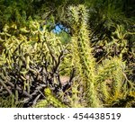Summer time cactus in Arziona