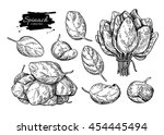 spinach leaves hand drawn... | Shutterstock .eps vector #454445494