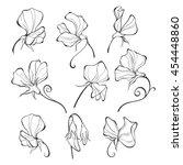 sweet peas. vector floral set.... | Shutterstock .eps vector #454448860