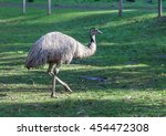Native Australian Emu...