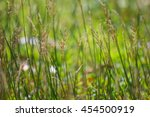 morning flower grass   Shutterstock . vector #454500919