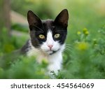 Black And White Cat In The...