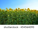 Постер, плакат: Close up on Sunflowers