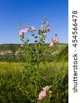 Small photo of Pink flower at the background of a meadow and a river. Althaea officinalis which is used as a medicinal and ornamental plant.