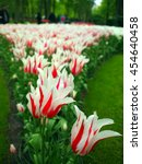 Lisse  The Netherlands   May 1...