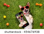 happy chihuahua terrier dog  in ... | Shutterstock . vector #454676938