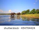 couple of african elephants... | Shutterstock . vector #454704424