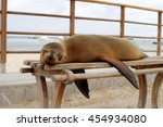 Sea Lion On A Bench In Puerto...