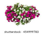 petunia flowers  clipping path... | Shutterstock . vector #454999783