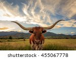 Texas Longhorn Steer In Rural...
