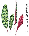 Set Of 4 Tropical Leaves....