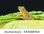 Small photo of Small frog or ranidae on bamboo and rice tree in black backgroun