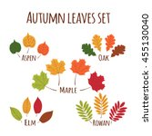 Autumn Leaves Set Vector. Fall...