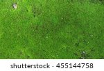 Green Moss Texture  Background...