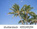 Hawaiian Palm Trees With A Blu...