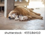 Stock photo close up cat and dog together lying on the floor 455186410