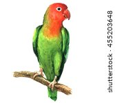 Red And Green Lovebird Parrot...