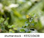 leaf and butterfly   Shutterstock . vector #455210638