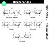 chemical formulas of main...   Shutterstock .eps vector #455220088