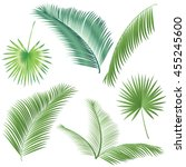 leaf palm tree isolated on... | Shutterstock .eps vector #455245600