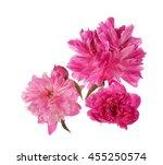 three pink peony flowers... | Shutterstock . vector #455250574