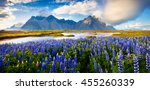 panorama of blooming lupine... | Shutterstock . vector #455260339