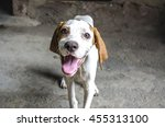 a friendly with smiling muzzle... | Shutterstock . vector #455313100