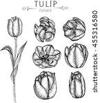 drawing flower. tulip  clip... | Shutterstock .eps vector #455316580