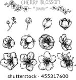 drawing flower. cherry blossom... | Shutterstock .eps vector #455317600