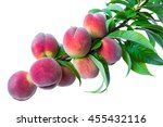 branch with ripe fruits peach... | Shutterstock . vector #455432116