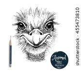 Hand Drawn Ostrich Bird Head...