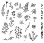 herbs and flowers. black and... | Shutterstock . vector #455534470