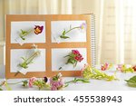 collection of flowers in... | Shutterstock . vector #455538943