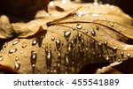 Fallen Autumn Leaves With Water ...