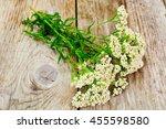 Milfoil Flower Studio Photo