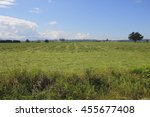 Small photo of Acres of cut grass lay in a Canadian field to dry/Summer Harvest in Canada/Acres of cut grass lay in a Canadian field to dry.
