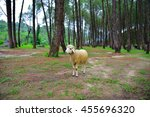 Young Sheep Amidst Of Lush...