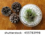 Small photo of air plant with scientific name Tillandsia in glass pots with pine corn