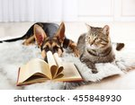 Cute Cat And Funny Dog With...